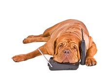 Cell phone-dog-tired-phone-calls-11800269